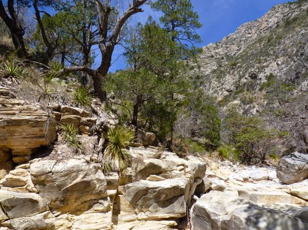 Rocks, trees, canyon