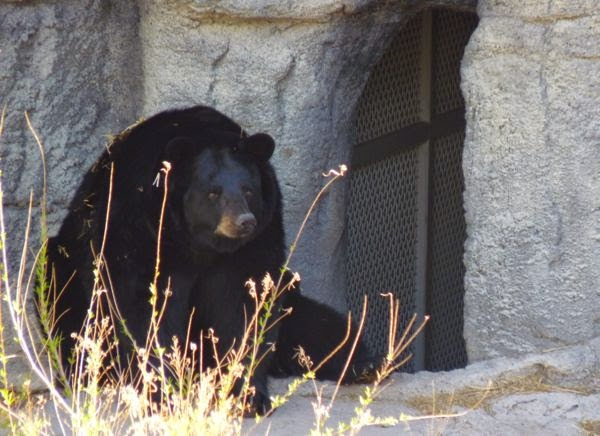 Bear sitting in front of lair