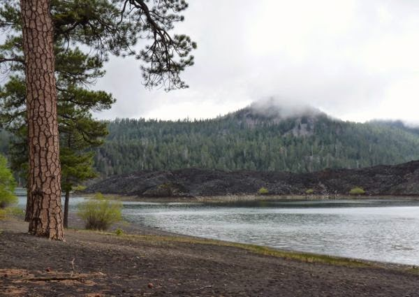 Pine tree, lava beds and lake