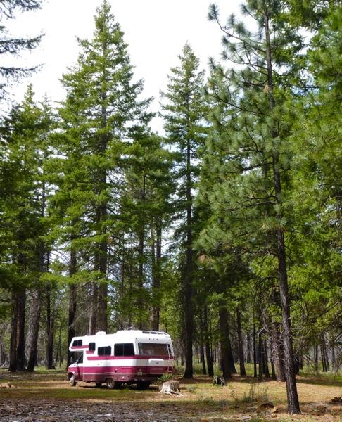 Motorhome amongst tall pine trees