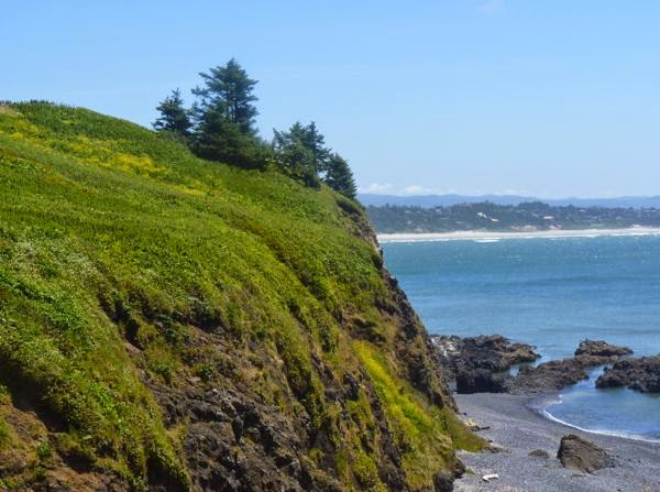 Grassy headland on Pacific coast