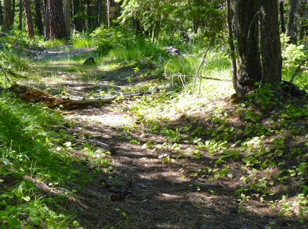 Wagon path in the forest