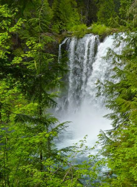 Tall waterfall with pine trees