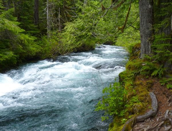 Rushing river in green forest
