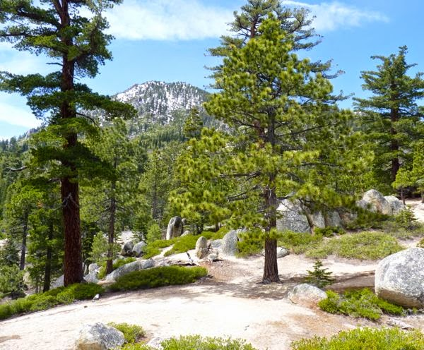 Large rocks and pine trees