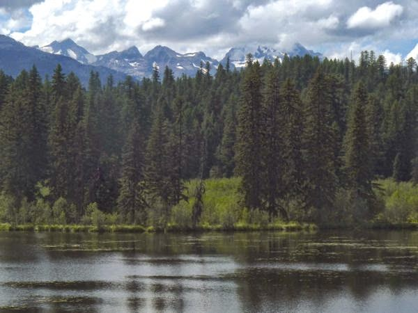 Lake with pines and mountains