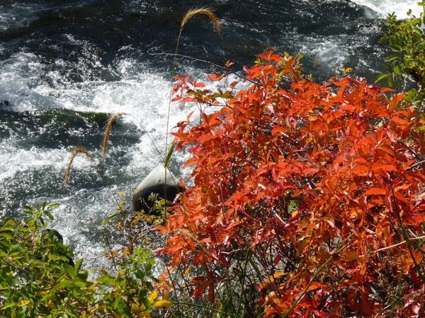 Red leaves by the river