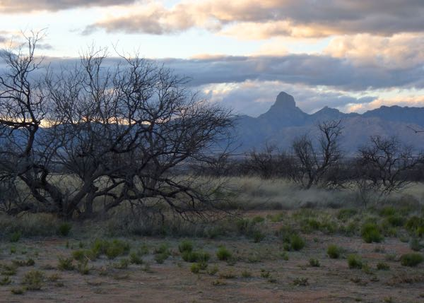 Mesquite trees with distant mountains