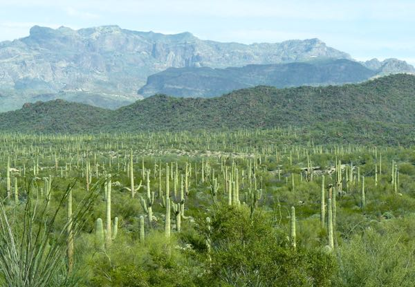 Mountains, saguaro, bushes