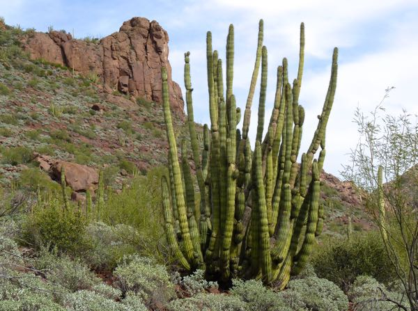 Cactus and cliff