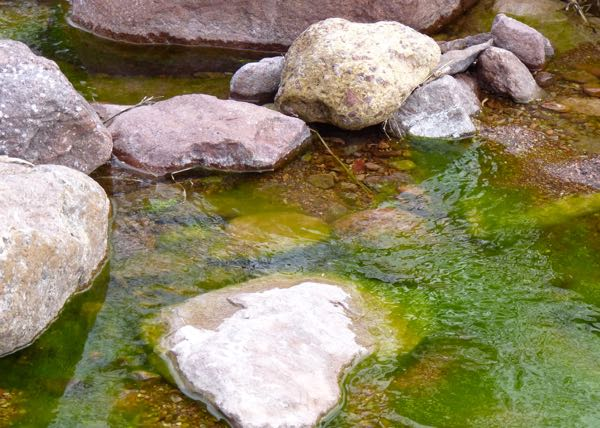 Rocks and green water