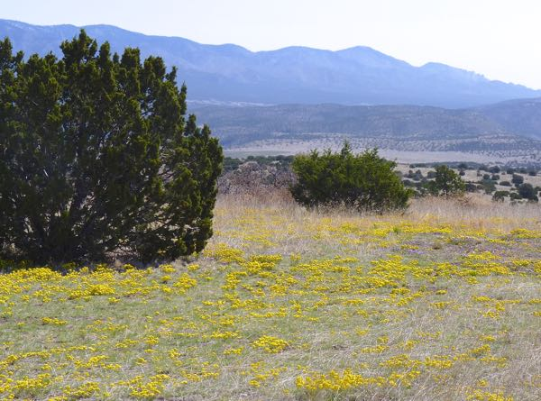 Flowers, trees, mountains
