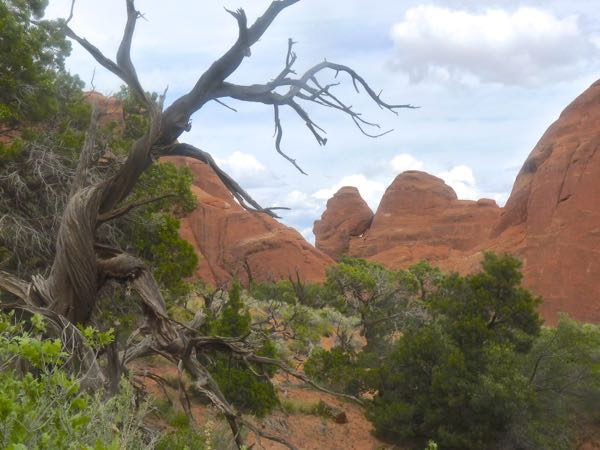 Dead tree and rock formations
