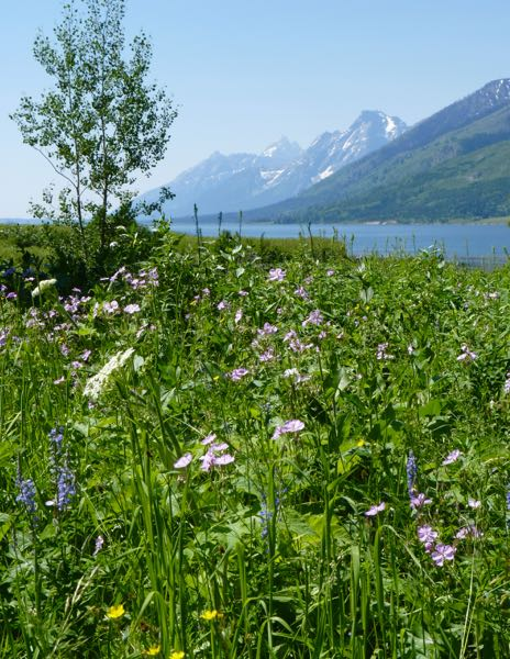 Lake, flowers, mountains