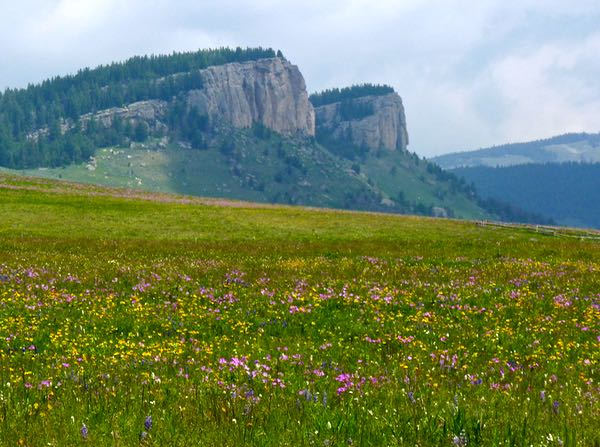 Buttes, wildflowers