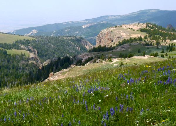 Hills, mountains, wildflowers