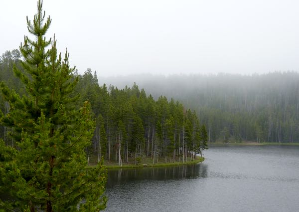 Lake, trees, fog