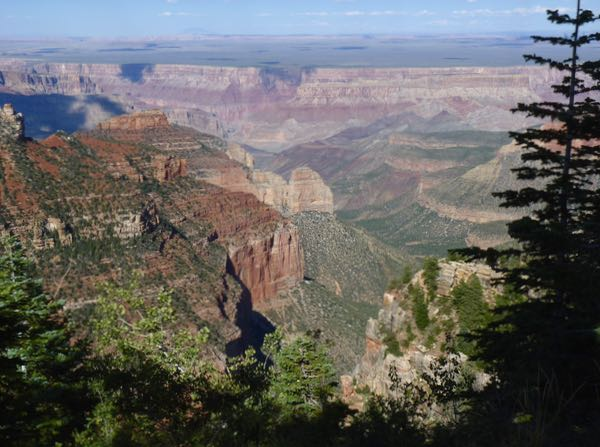 Canyon, cliffs, trees