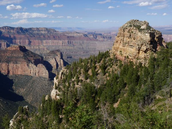 Canyon, butte, trees