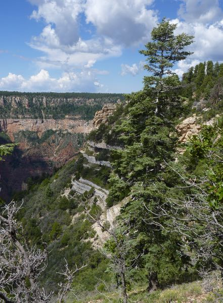Canyon, trees, cliffs, clouds