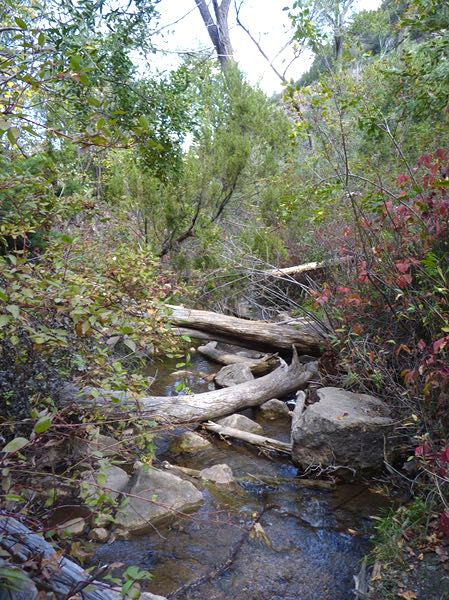 Creek, logs, rocks, trees