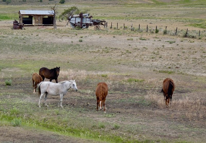 Horses in New Mexico